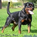 1-1-Enzo-Monty-Black