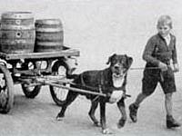 rottweiler-history-2