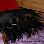 angaros-puppies
