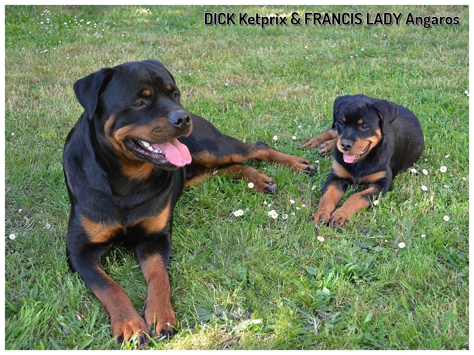Dick+Francis